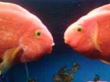 Рыбки целуются...Ня-ня-няяяяя!